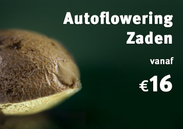 Autoflower Cannabis Zaden